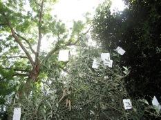 Letters to Yoko, Venice
