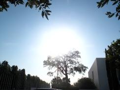 Sun or Tree