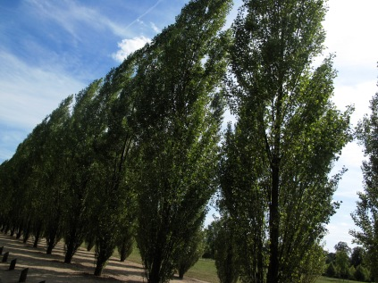 Army of trees.